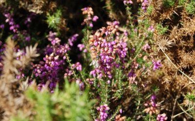 El calendario de floración y la recogida de miel