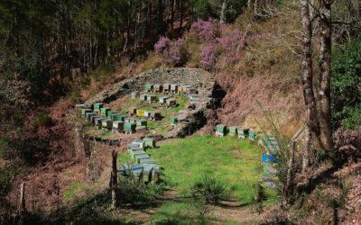 Conoce la historia de la apicultura en Asturias