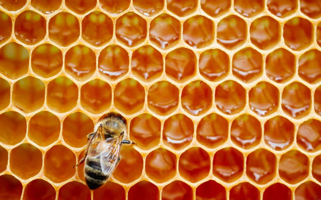 abejas productoras de miel