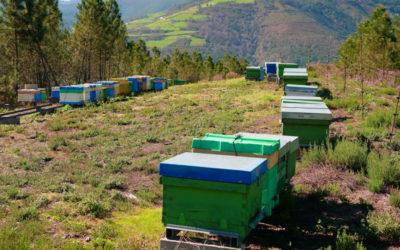 ¿Qué es la apicultura sostenible?